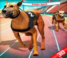 Çılgın Köpek Yarışı