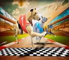 Çılgın Köpek Yarışları 3d
