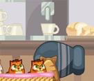 Kedi Köpek Savaşı