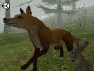 Vahşi Hayvanlar 3d