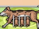 Yavru Köpek Besleme